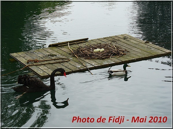 PHOTOS DE FIDJI MEGA ANNEVOIE (1)
