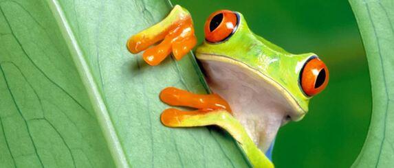 L'œil d'une autruche est plus gros que son cerveau !  Les grenouilles utilisent leurs yeux pour avaler la nourriture ! (Le saviez-vous)