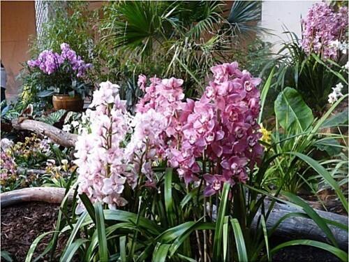 Orchidees-Menton-2011--13-.JPG