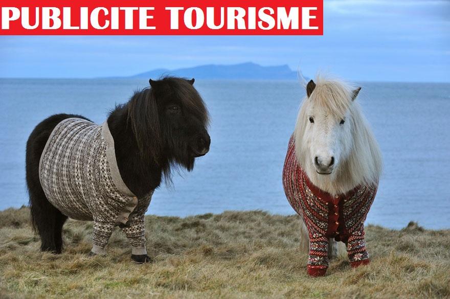 Des poneys en cardigans pour le tourisme en Ecosse