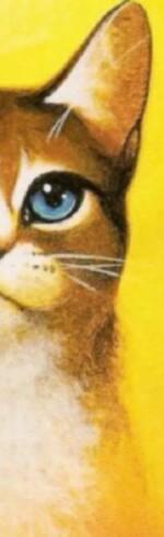 Marque-pages Étoile de Feu et autres chats roux
