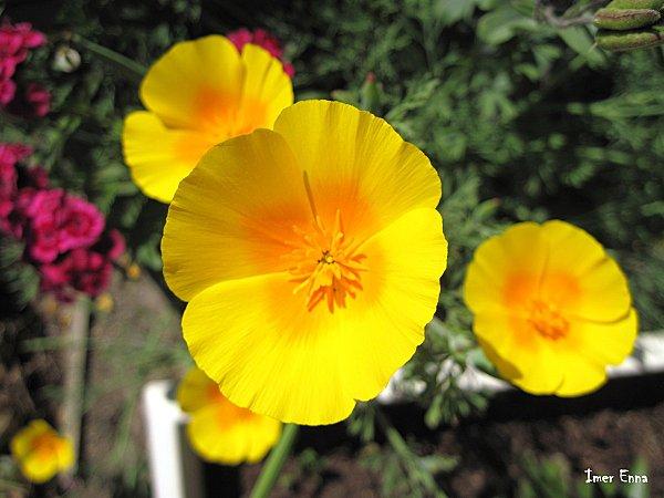 Fleurs 3863