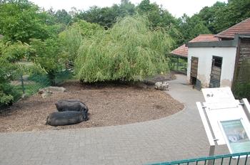 Zoo Neunkirchen 2012 043