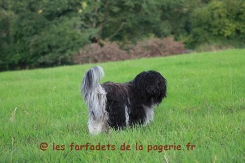 Fadièze Xiangbatiou