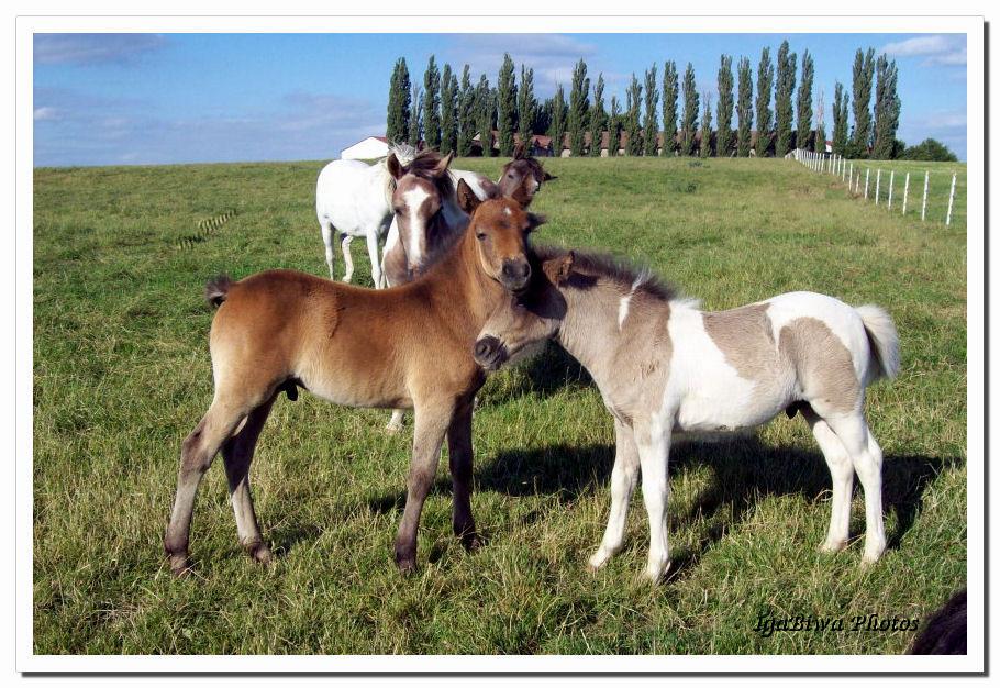 Les Chevaux de Juvigny