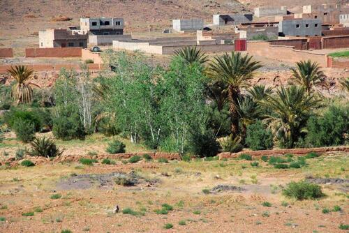 Bouleaux et palmiers
