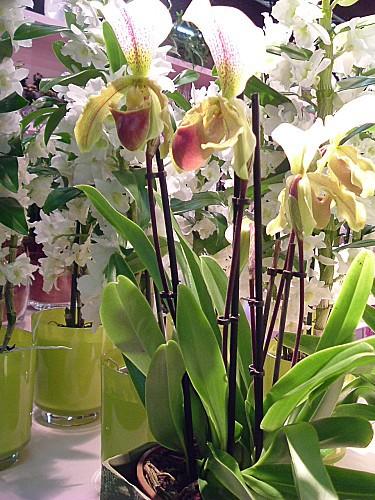 Orchidées 002
