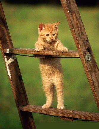 chaton-escabeau.jpg