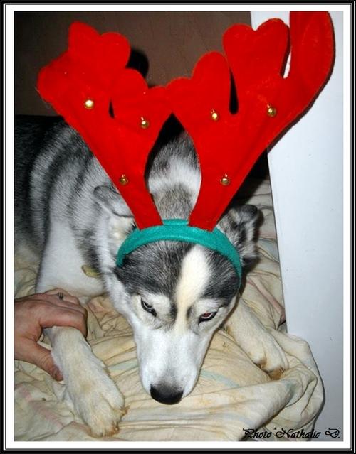 Kunzite Noël
