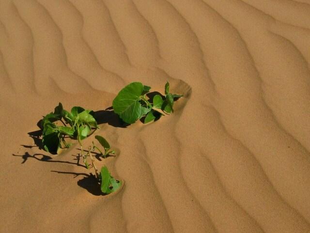 Ho, toi mon ami le désert