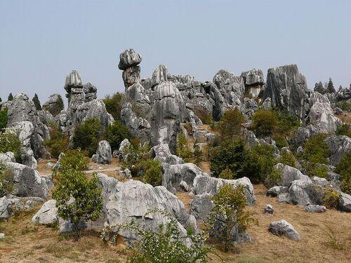 la forêt de pierre, suite et fin;