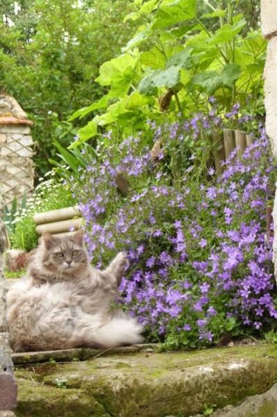 jardins-d-auger---mai-2014---chez-catherine---vanille-et-ca.jpg