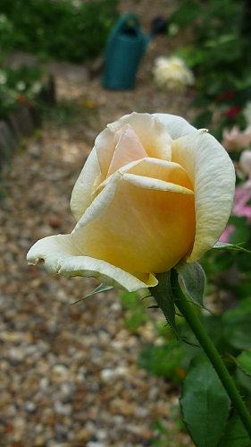 fleurs-et-canal-012-copie-1.JPG