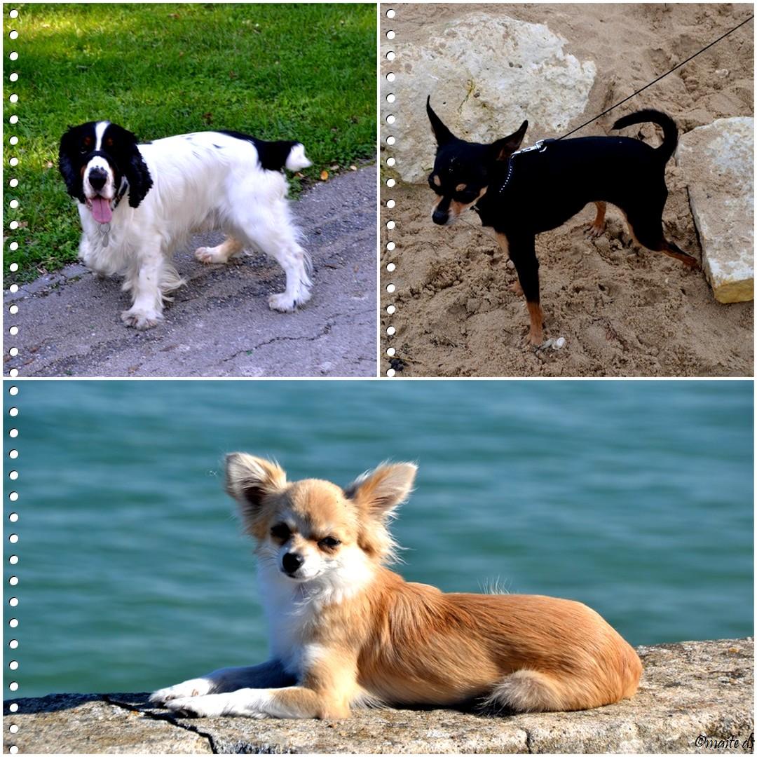 Rencontre (1) avec des chiens en Charente-Maritime 2014