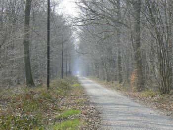 Le chemin du loup