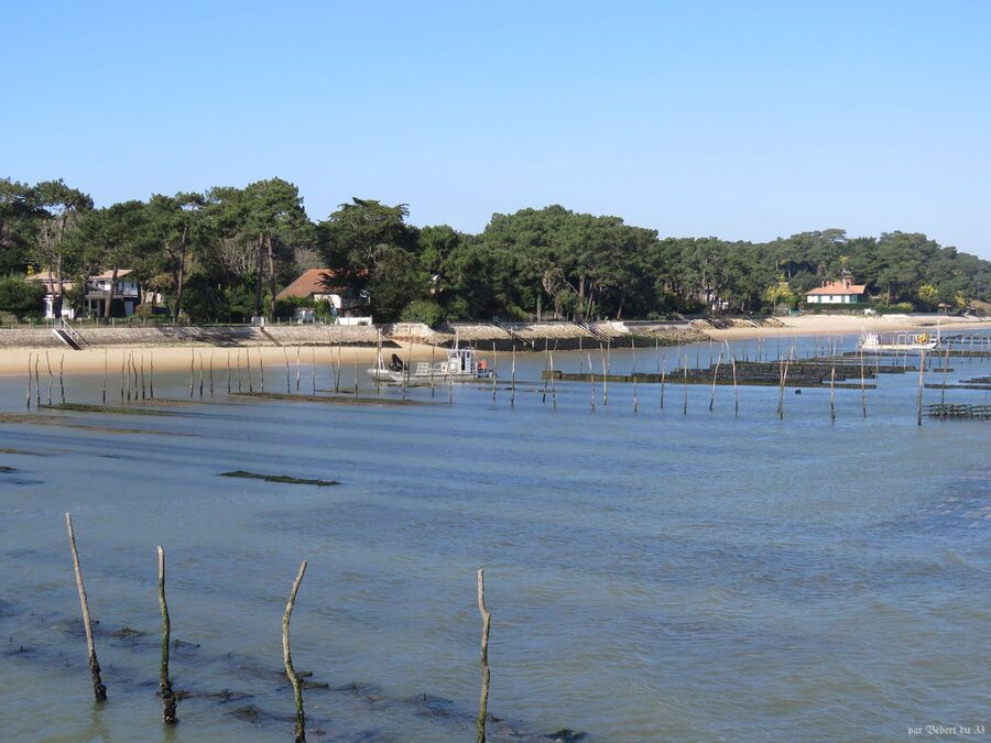 le Cap Ferret - sur la bassin (33)