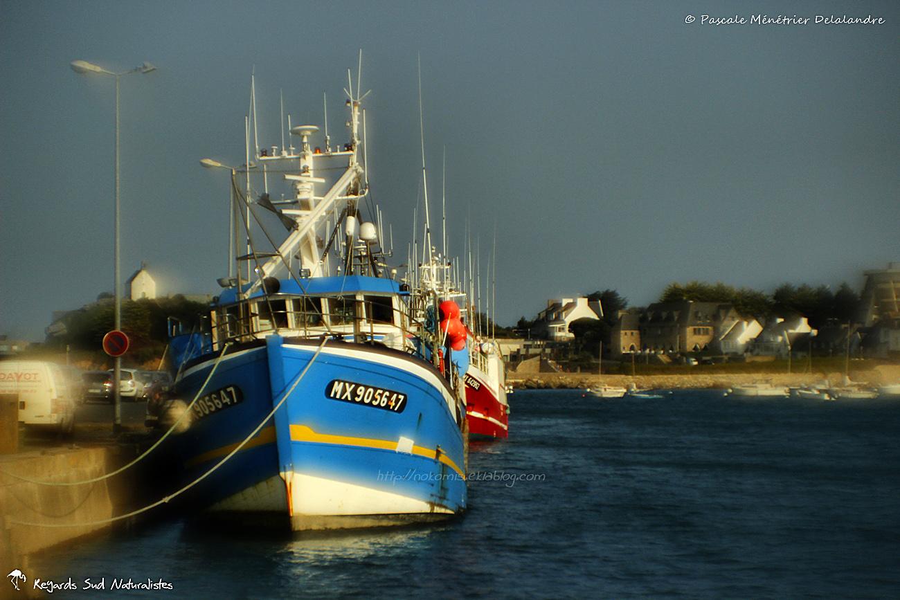 Port de Roscoff