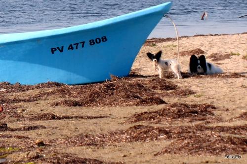 Le pêcheur et son chien !