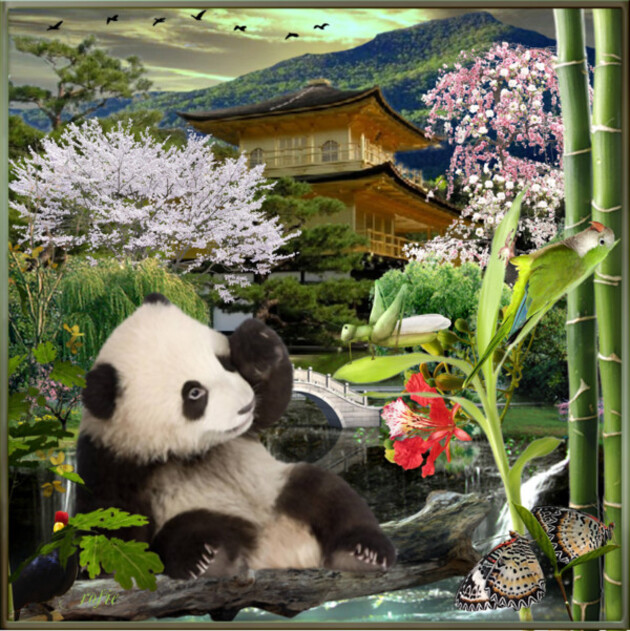 jojo le Panda