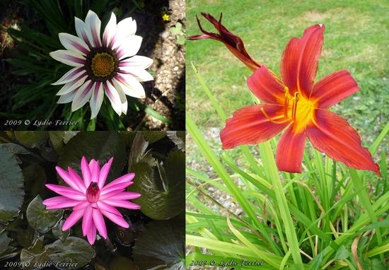 2009 Fleurs