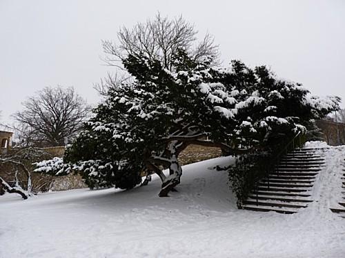 Promenade hivernale 015