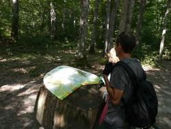 Balade en forêt de Tronçay