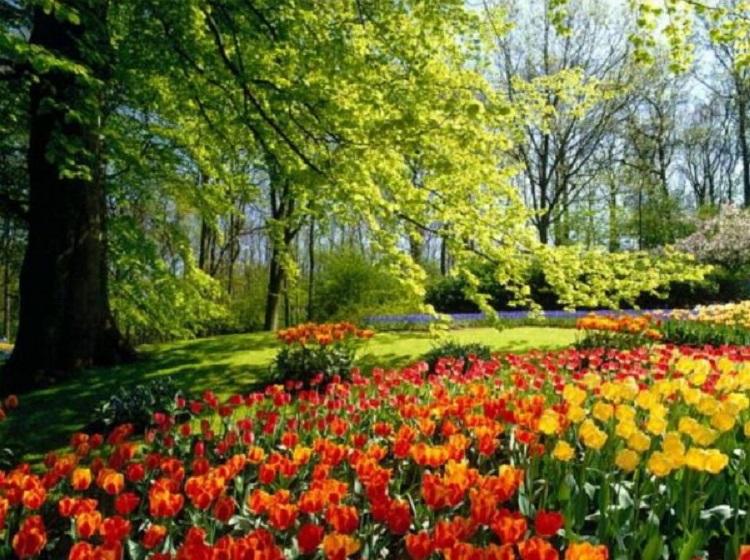 Le printemps est bien là