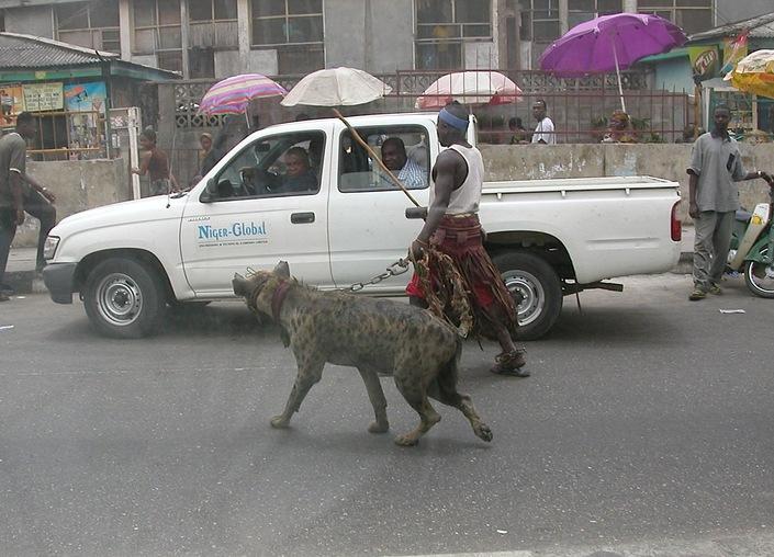 Pieter Hugo Street Hyena Lagos