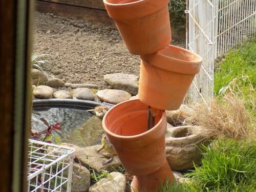 Le bain des moineaux au jardin