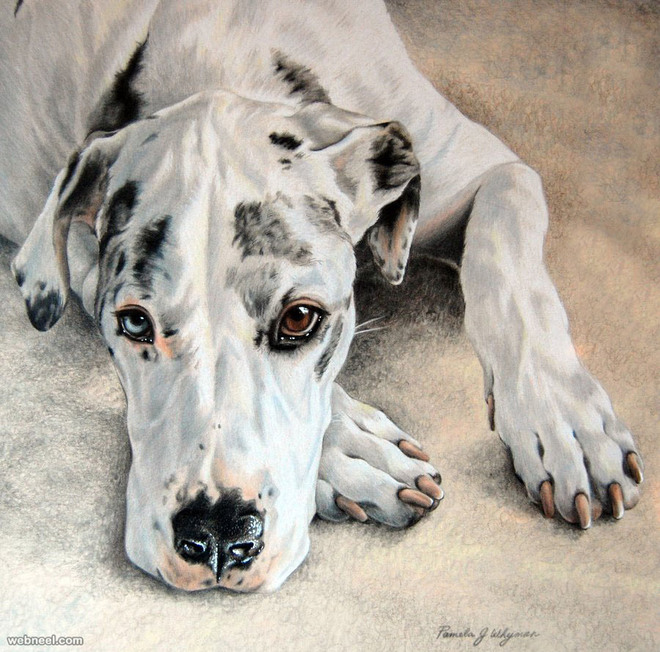 dog colored pencil drawing