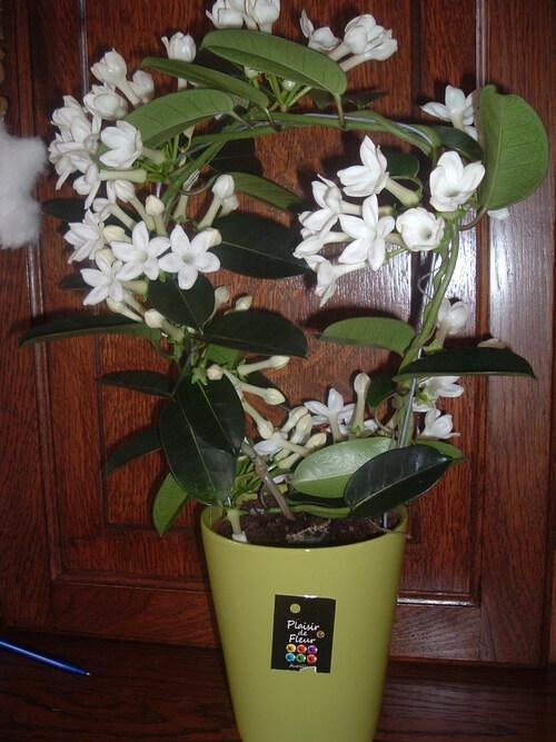 nouvelles de mes plantes
