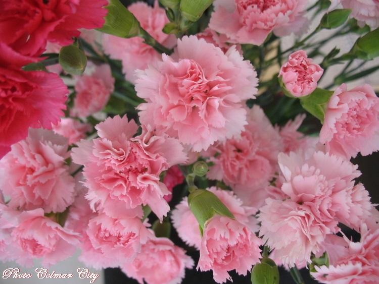 Des fleurs chez le coiffeur 31