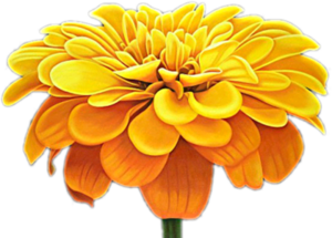 Une fleur