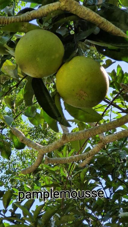 Voyage de Noces N° 13 Bali : Exotisme fruits et plantes.