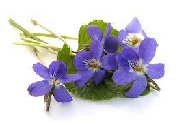 modeste violettes ...