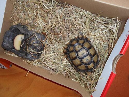 Visite de Cannelle la tortue