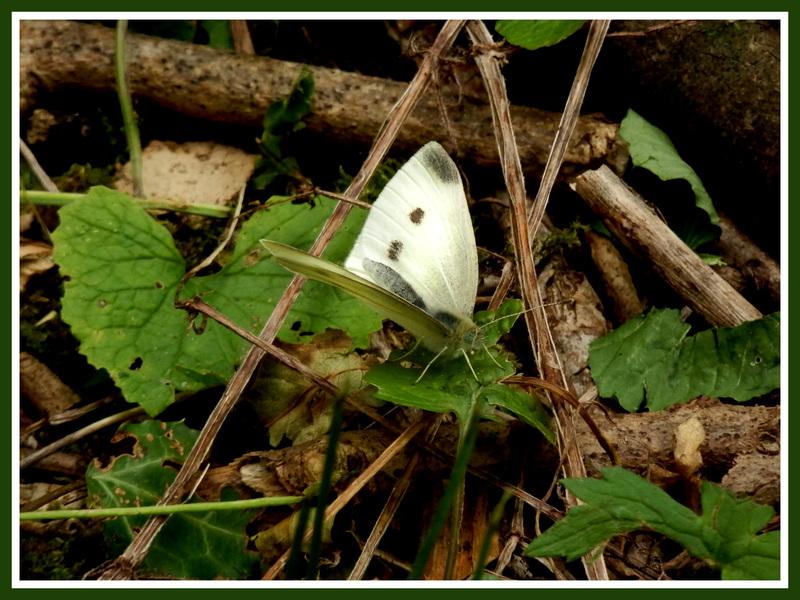 Riviere.Papillons et libellules.Images gratuites.
