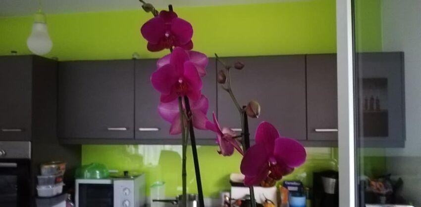 Bonne journée avec des fleurs ...
