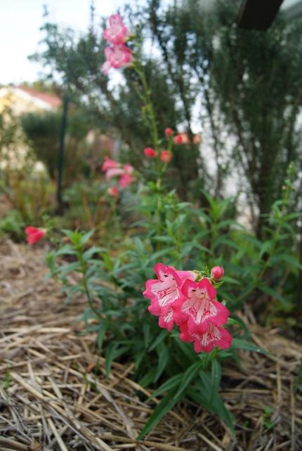 Mon jardin landais à la mi-novembre