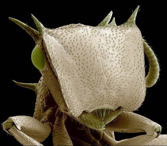 steve gschmeissner18 Incroyables photos au microscope dinsectes et araignées