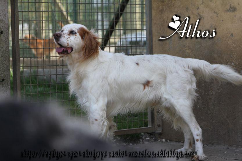 Athos - Nouvelles photos
