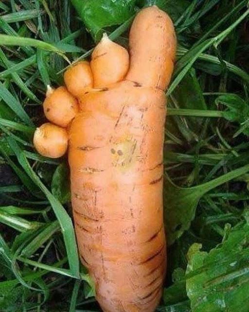 Légume bon... pour les pieds !
