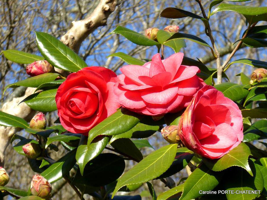 *Encore l'hiver à la Promenade Fleurie*
