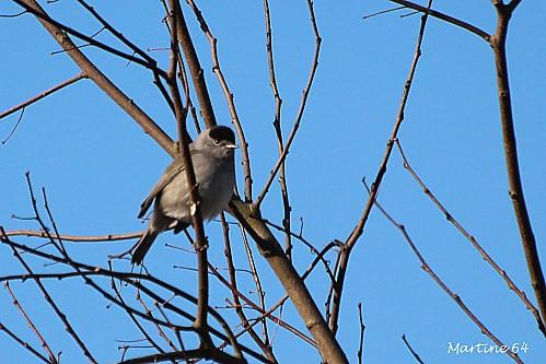 Oiseaux-02-3569-copie.jpg