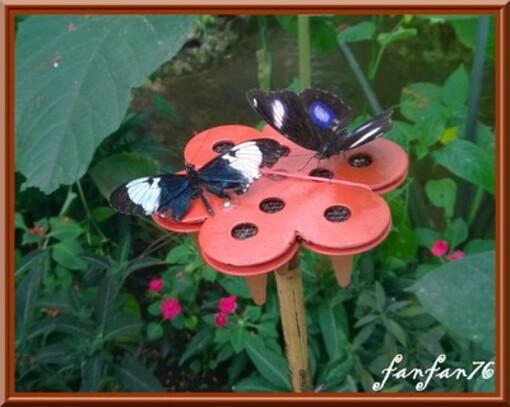 D'autres photos de papillons