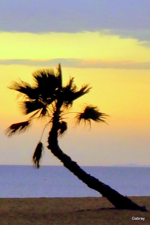 Palmiers du soir