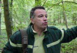 Coupes importantes en forêt de Phalempin