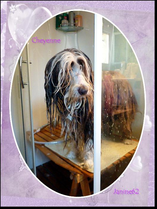 le bain de Cheyenne - Année 2011 -