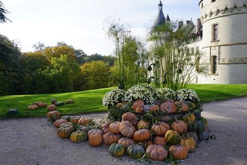 Cucurbitacées à Chaumont s/Loire