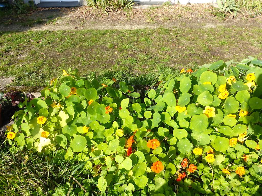 Demi-pause avec les fleurs de mon jardin!